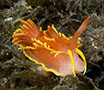 Marine Photos - Great British Marine Animals
